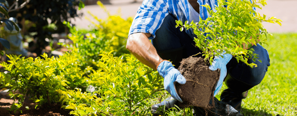 Man re-potting a plant in a garden