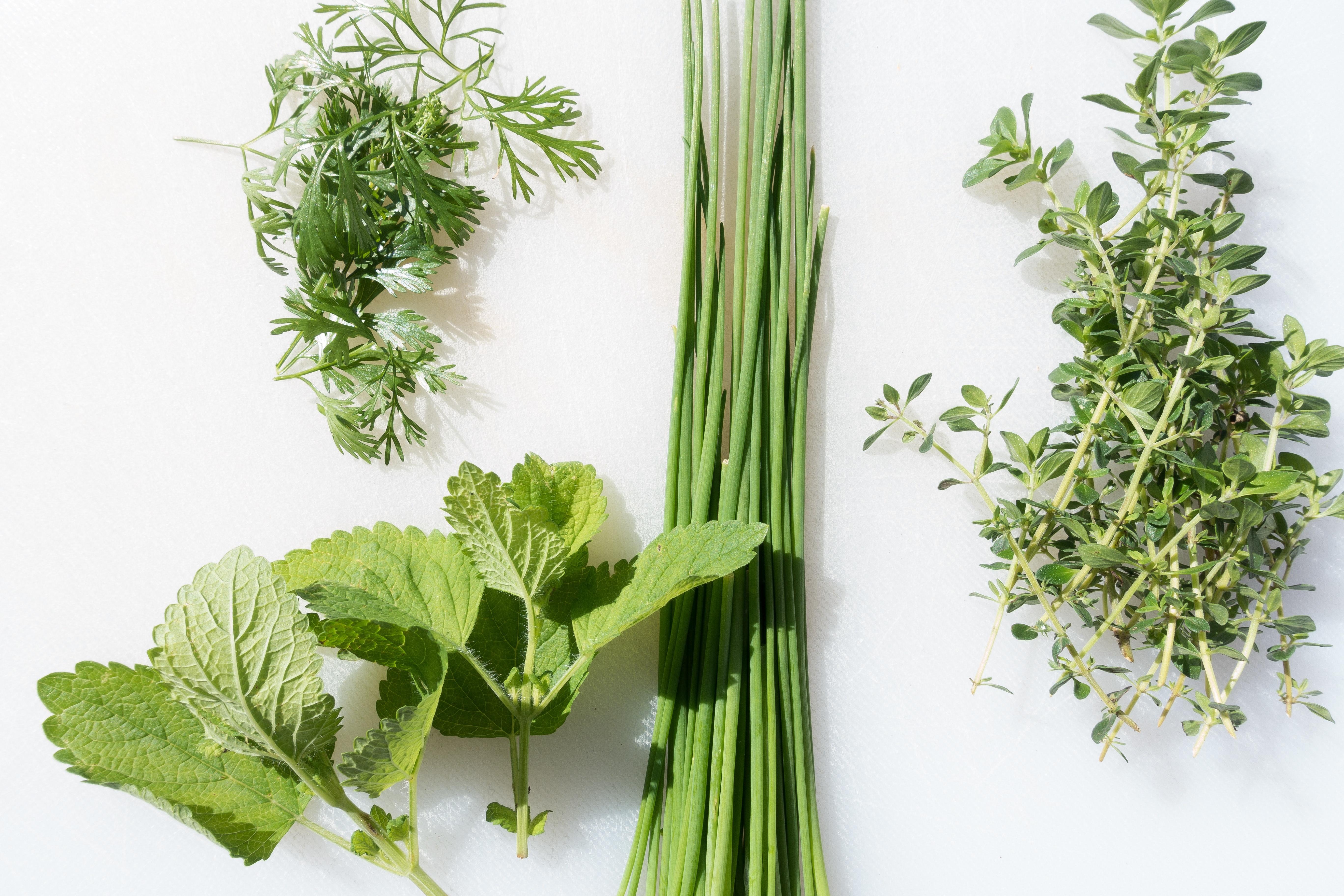 Assortment of fresh herbs