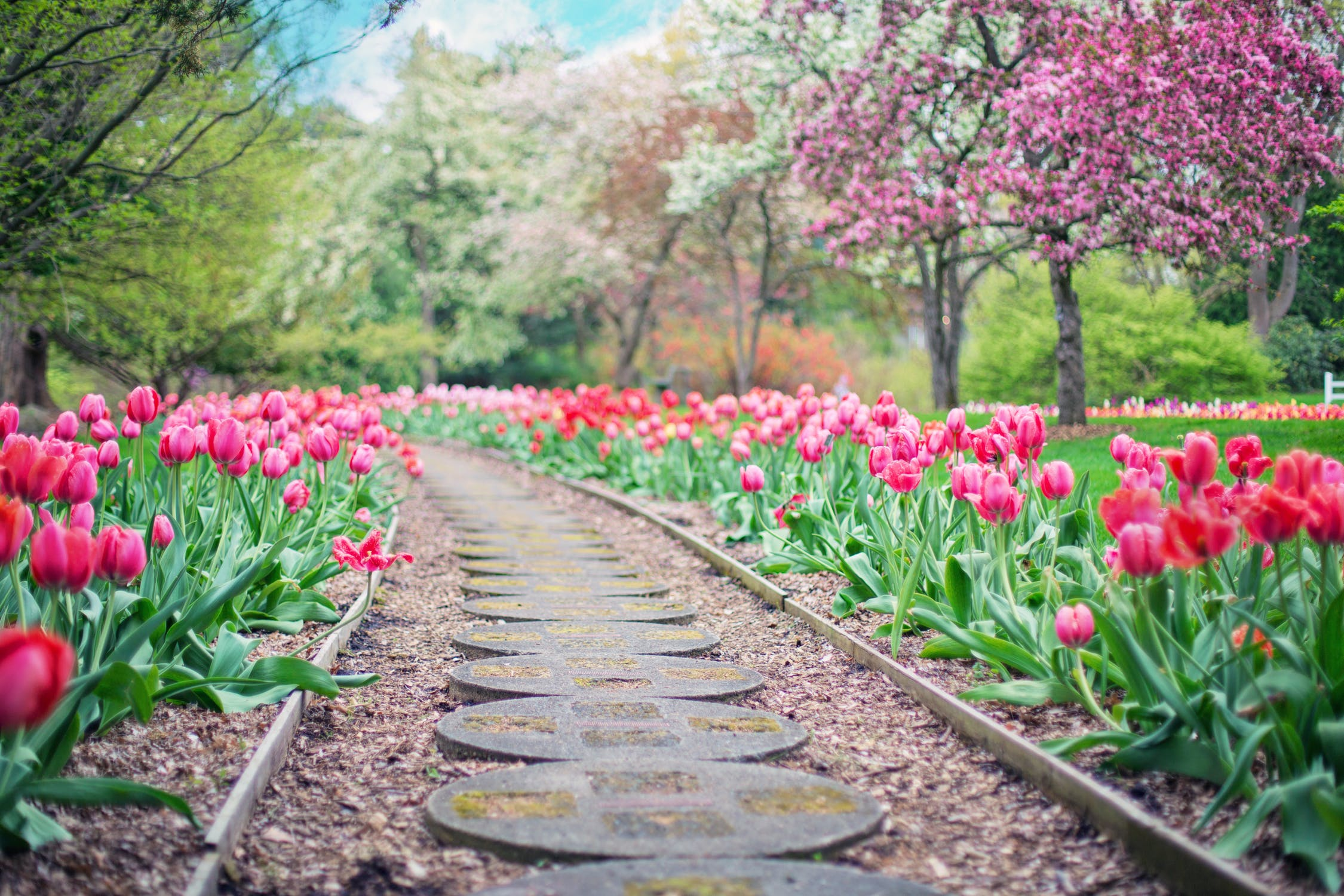 Path made of neatly laid stepping stones lined with pink tulips