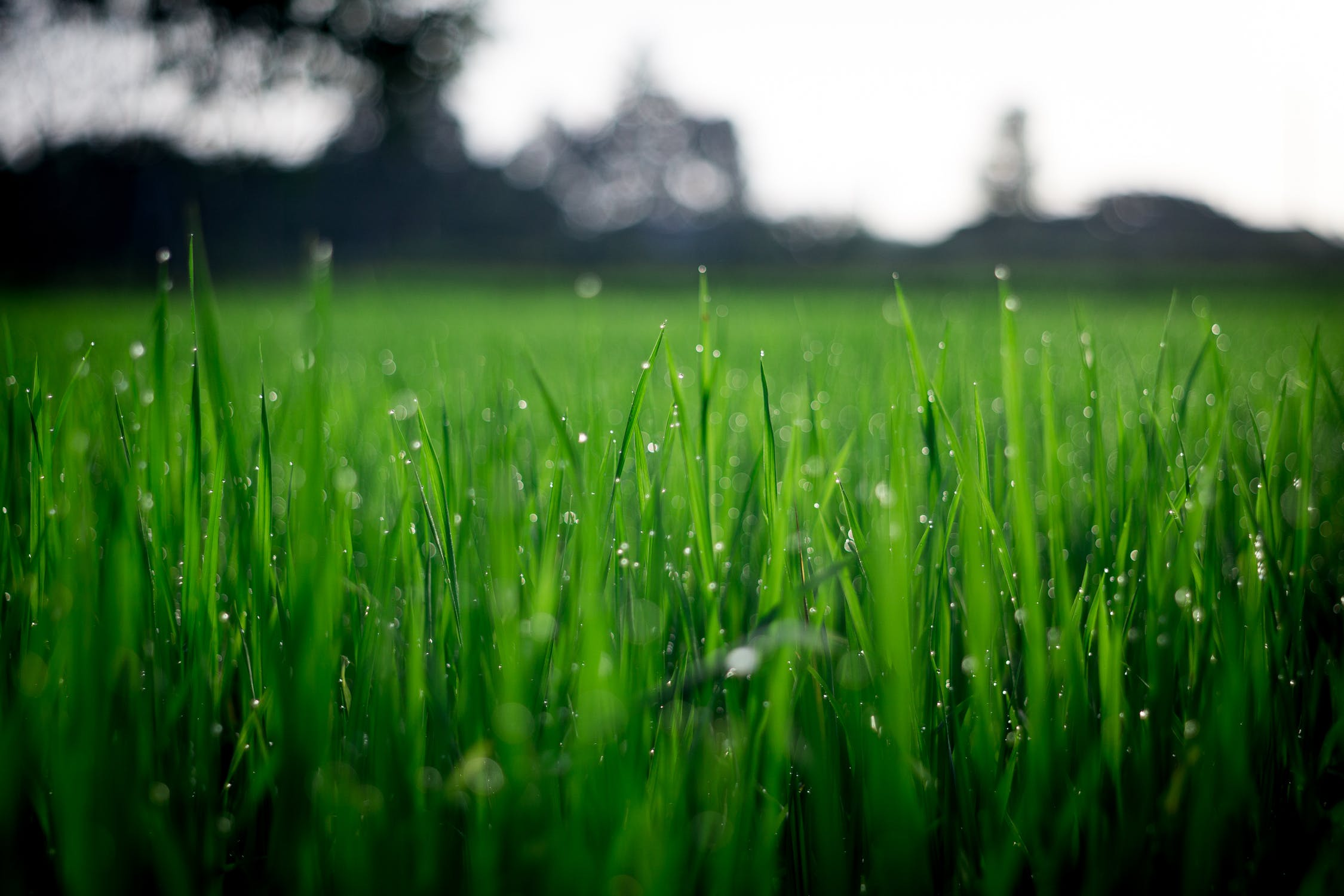 Close up image of healthy green lawn covered in morning dew