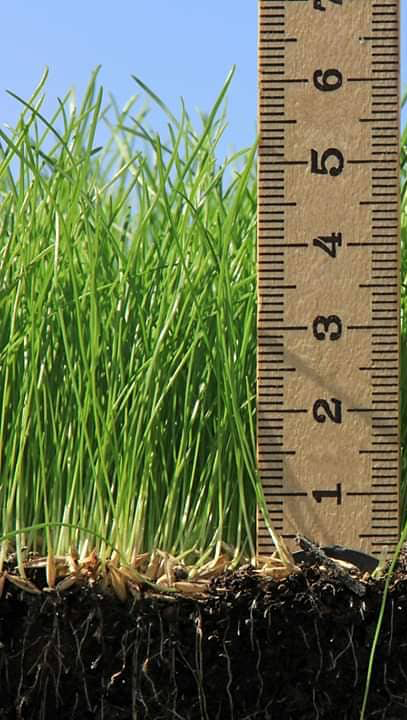 Lawn Height