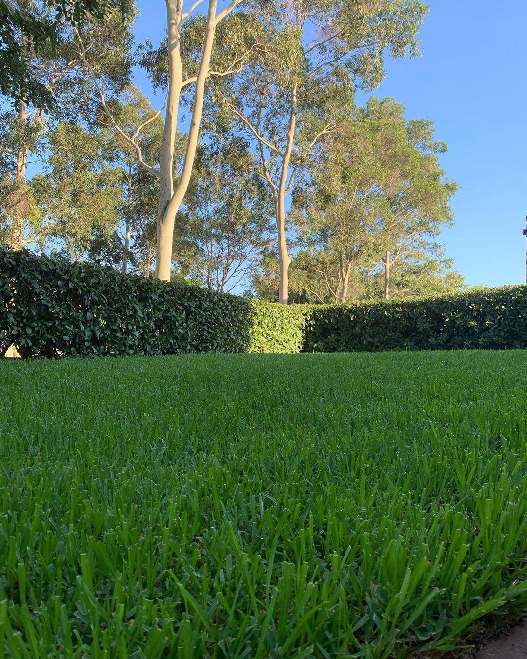 Shady Lawns