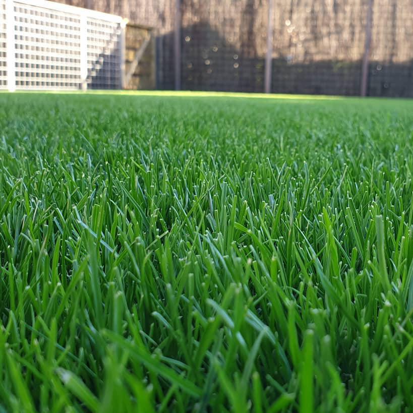 mowed_lawn